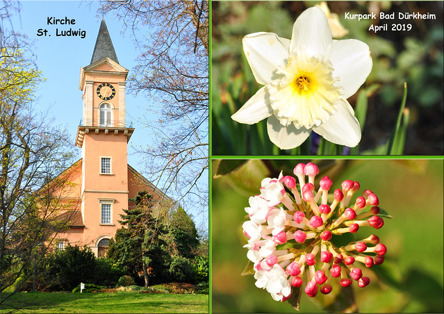 April 2019 ... Frühling in Bad Dürkheim ... Blühender Kurpark ... Fotos und Collagen: Brigitte Stolle