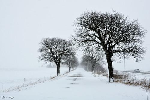 sweden sverige schweden suecia suède svezia スウェーデン lund linero tree träd baum arbre árbol albero 木 snow snö schnee nieve neige neve 雪 road väg weg route camino via 道