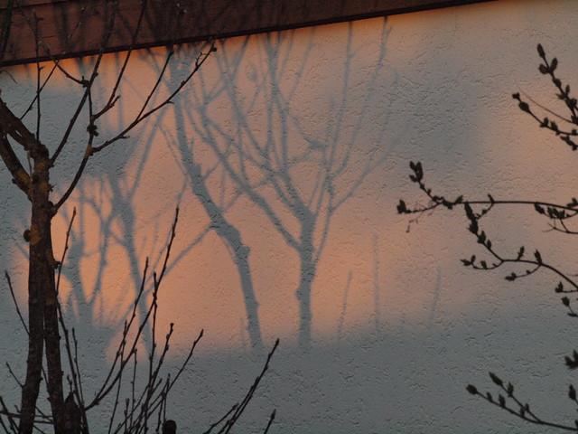 creeping shadows 003