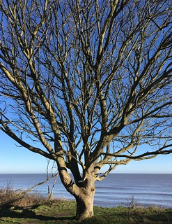 Tree   by Phil Gyford