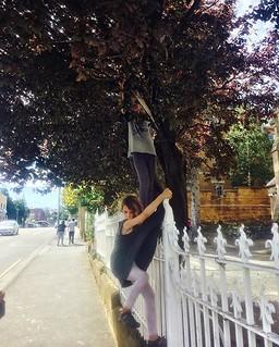 253/365 • borrowing plums from god (over a church fence) • . . #hobart #tasmania #forage #yum #plums #streetfood #northhobart #tasmaniagram #discovertasmania #sisters #wilderness1100 #sailing #bellalunaboat #cruising #exploring #Summer2018 #seagypsies #ab | by miaow
