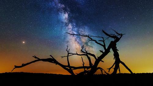 snp bigmeadows findyourpark milkyway shenandoahnationalpark shenandoah nightphotography silhouette tree astrophotography astro stars nationalparkservice