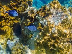DCL March 2019 Tortola Underwater-212.jpg
