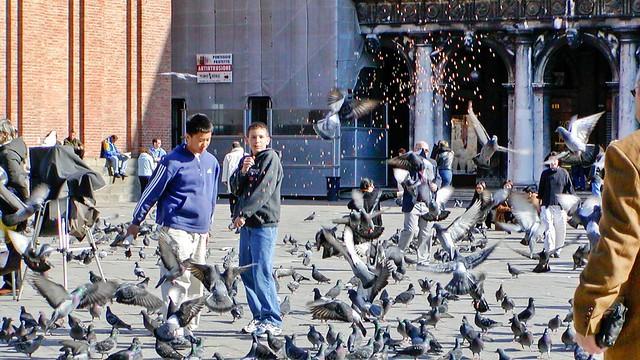 Taubenplage auf dem Markusplatz