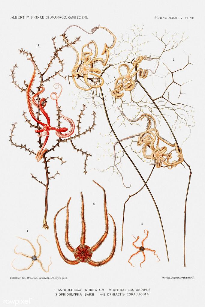 Starfish varieties set illustration Poster