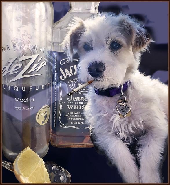 Eddie-Tail Cocktail