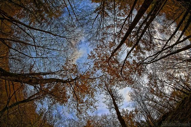 In the woods - Dans les bois