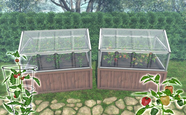 JIAN Mini Greenhouses // Tomato & Pepper (Belle. April '19)