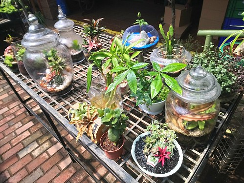 dish garden and terrariums