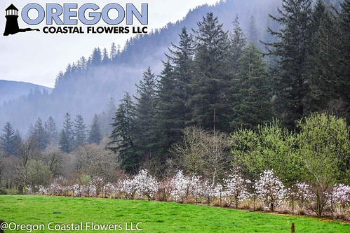 Farm Photos | by Oregon Coastal Flowers