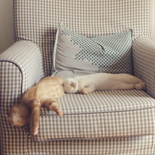 Lazy Sunday morning. #kittens #sleep   by Sunfox
