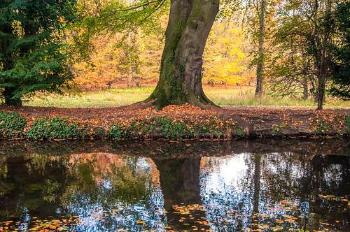 20161107134924 england gbr lode unitedkingdom geo:lat=5223737201 geo:lon=023886247 geotagged outdoor nationaltrust tree water light sunset