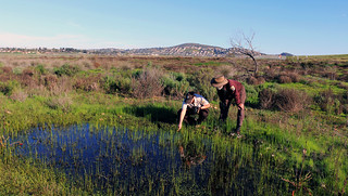 Looking for endangered San Diego Fairy Shrimp in vernal pools. | by USFWS Pacific Southwest Region