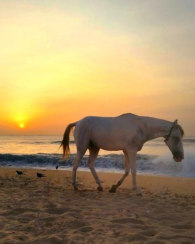 sunset madras whitehorse whimsical bayofbengal india southasian