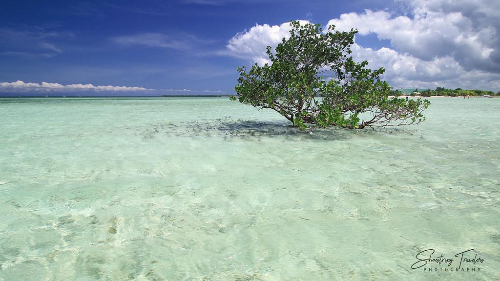 Virgin Island Mangrove