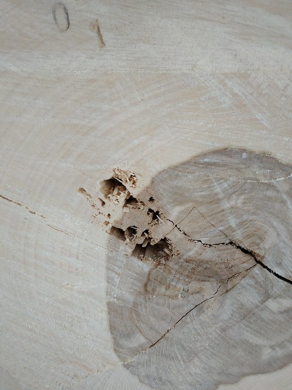 Wood texture #02