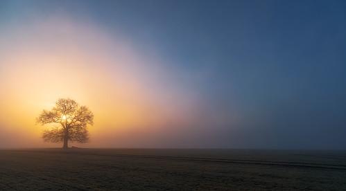 arrow arrowlane warwickshire dawn sunrise dawnmist dawnglow mist misty fog foggy lonetree light landscape sony a7iii sony2470mmf28gm jactoll