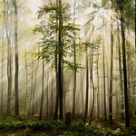 for forest lovers