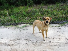 Canis lupus familiaris --  Dog 2710