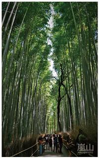 嵐山半日遊-24