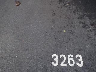 3263 rat