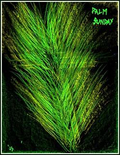 PalmSunday | by traqair57