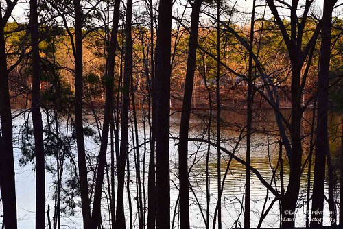 laurensphotography lauren3838photography landscape tree forest lake georgia nikon d750 nature ilovenature park stonemountain sunset silhouette tourism