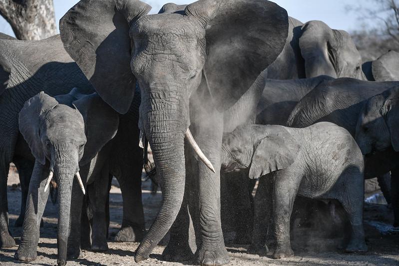 2276 Elephant