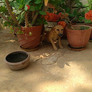 Puppy settling under the plants #dogsofinstagram | by chaitanyakrishnan