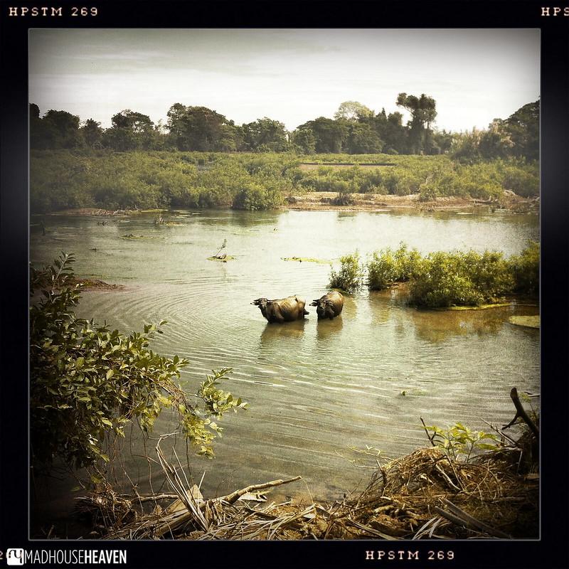 Laos - 0132