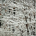Low Snow_Casa Loma Rd by Barking Dog Photos_Bruce Gregory