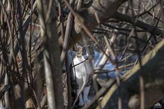 Bird Watching ;-)
