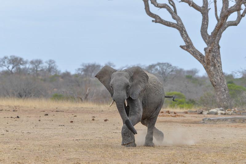 2245 Elephant