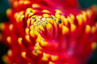 Kew Gardens Orchids-23 | by adambowie
