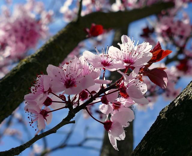 Llegó la primavera a la ciudad todo ha cambiado de color...