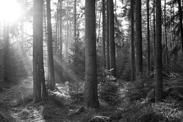 Wald sw