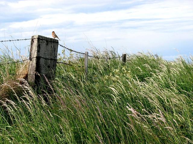 Northumberland View (5)