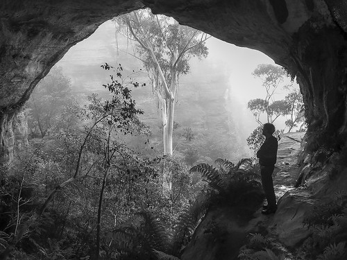 [MP] Blue Gum Admirer | by Upper Blue Mountains Camera Club