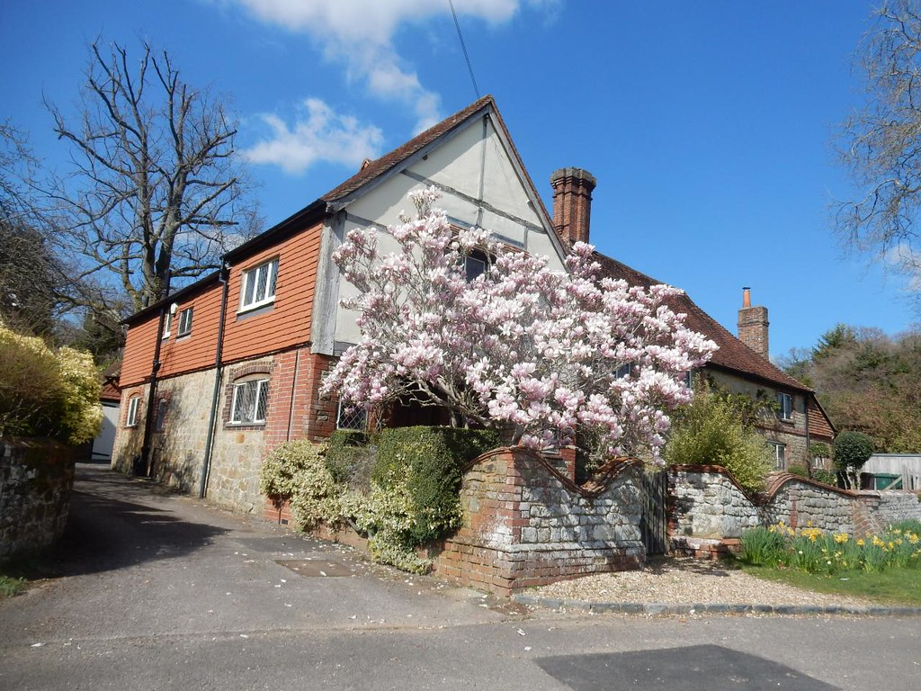 Magnolia and cottage Fernhurst, Haslemere Circular
