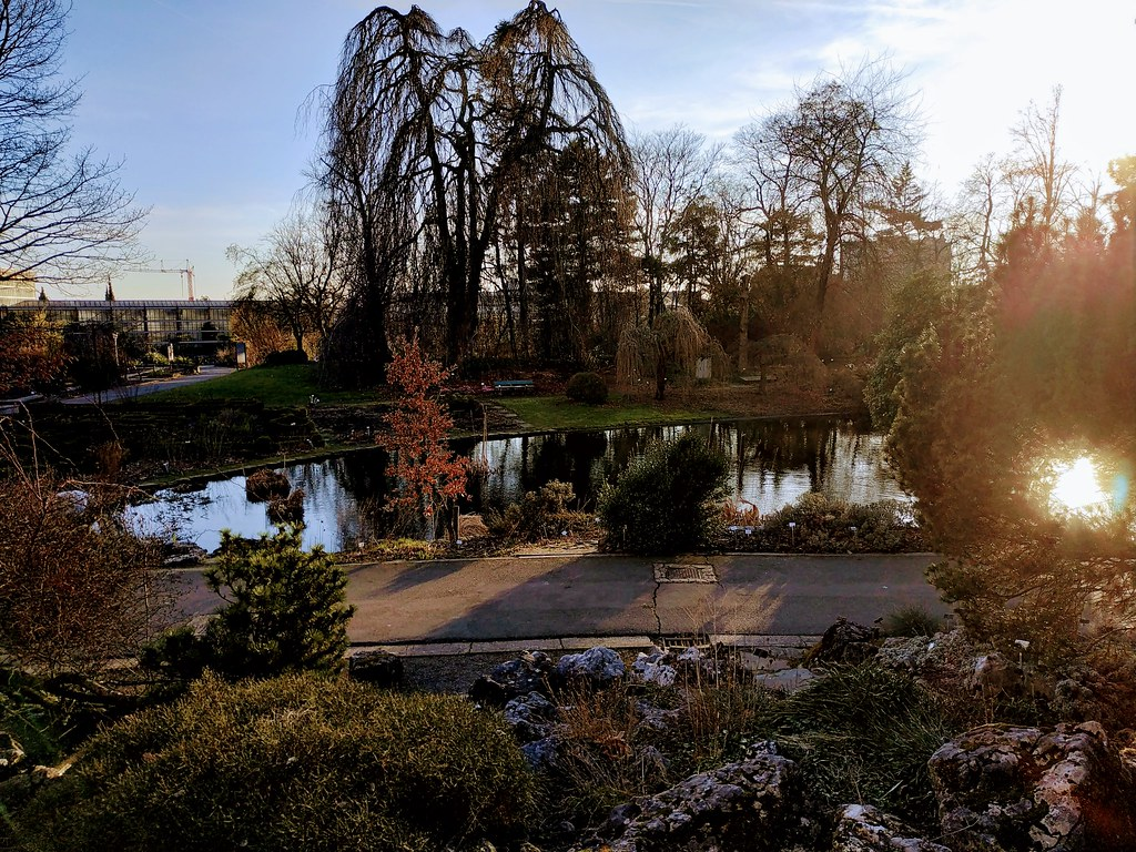 Oasis del jardín botánico