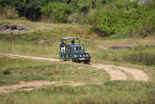 paulinuk99999 bandipur national tiger reserve india park wildlife ilce7m3 sal70400g safari jeep