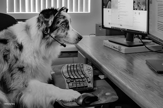 """2/52 """"Woof! This is tech support.  How can I help you?"""" 