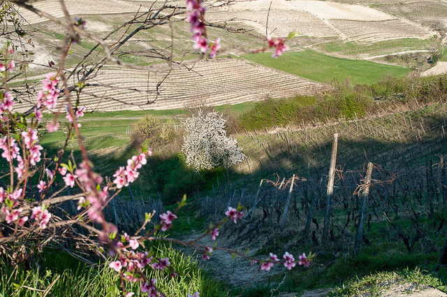 Abbazia di Vezzolano (Albugnano-AT) (115)