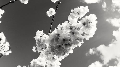 Fleurs et nuages à La Défense | by Aldor