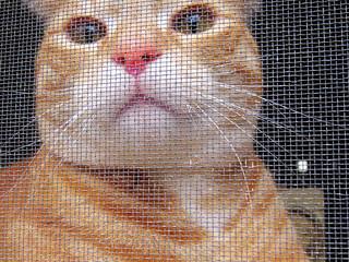 Screen Cat   by T Garceau