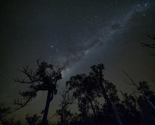 trees silhouette stars nightsky milkyway longexposure citylights