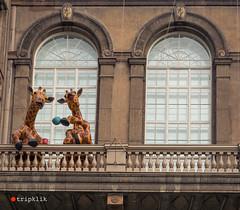 Giraffe Tea Party