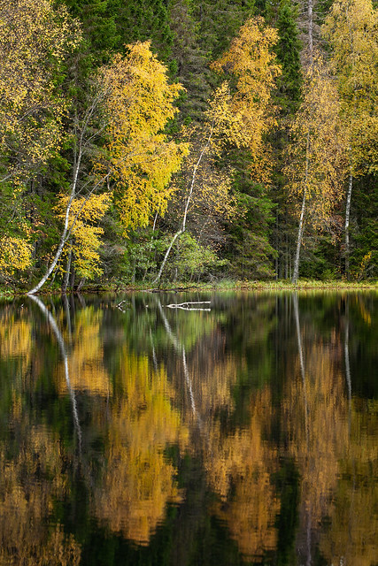Autumnal colours and reflections on Tervalampi