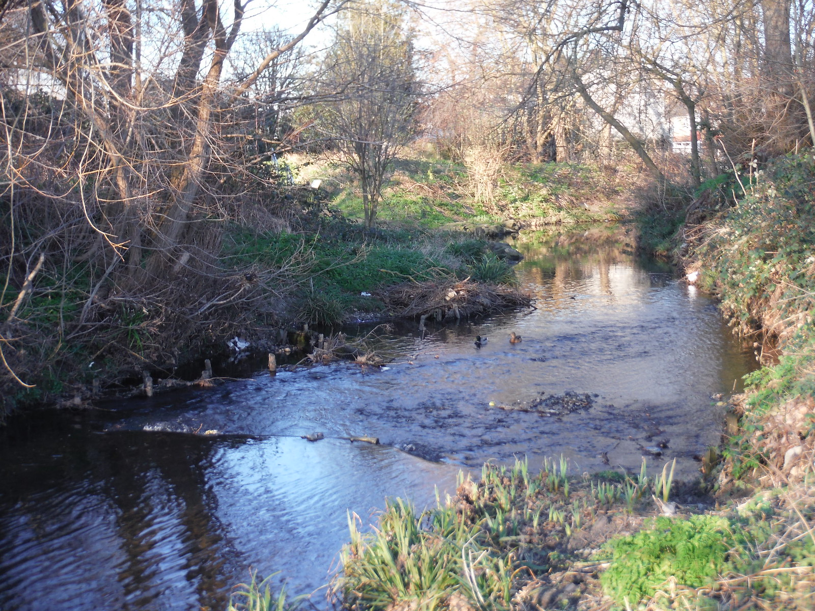 River Ravensbourne, Ladywell Fields SWC Short Walk 36 - Waterlink Way (Lower Sydenham to Greenwich)