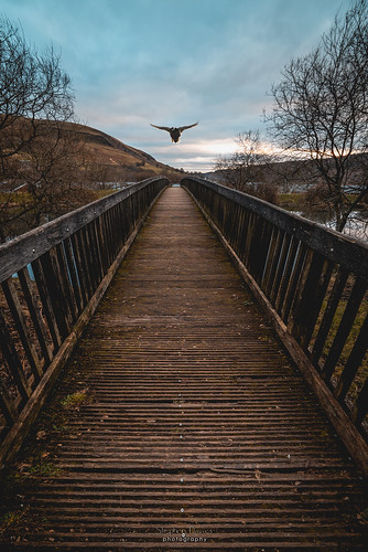 One flew over the pond bridge | by steved_np3